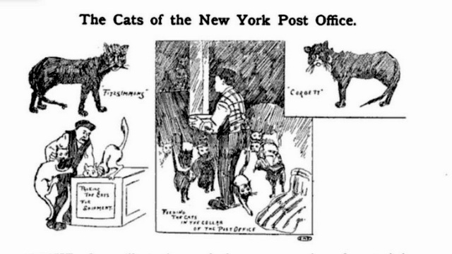 1904: The Feline Police Squad of New York's General Post