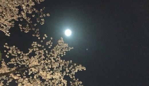 岡崎公園桜祭り2019満開予想や夜桜の見どころは?混雑状況や屋台も!