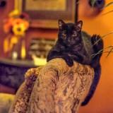 カルディ猫の日バッグ2019夏の予約や在庫や再入荷は?値段や並ぶ時間も!