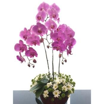Carmela 2 - Hatiku Florist Jakarta