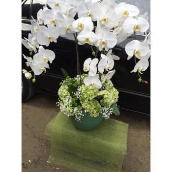 Carmela 3 - Hatiku Florist Jakarta