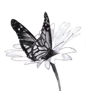 butterfly drawings butterflies drawing pencil flowers deviantart flower sketch draw hative easy pixelworlds inspiration outstanding cool drawn realistic pretty step