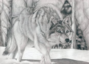 wolf drawings drawing cool snow wolves inspiration hative pencil crouched heart klaus explore draw sketch template templates bird artwork deviantart