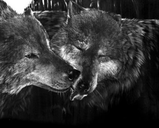 wolf drawings drawing cool hative inspiration