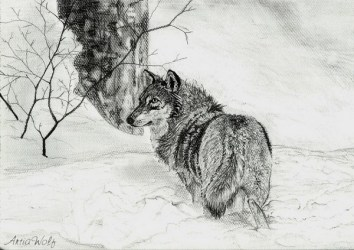 wolf drawings drawing snow cool wolves inspiration draw painting hative animal deviantart animals