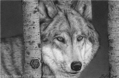 wolf drawings cool drawing wolves pencil inspiration hative wolfs draw animal sketch lone