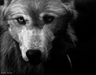 wolf drawings scratchboard cool drawing deviantart bop rah awesome inspiration drawn scratch hative wolves wolfs amazing board painted illustrations hand