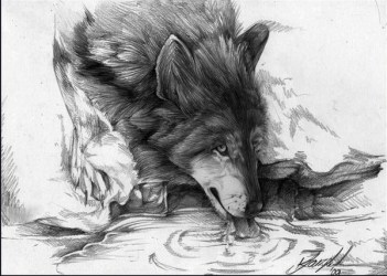 wolf drawings cool drawing wolves inspiration draw drinking hative anime wood da