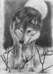 wolf drawings cool drawing pencil wolves sketches animal animals inspiration night amazing draw sketch step hative mates slenderman bride tattoo