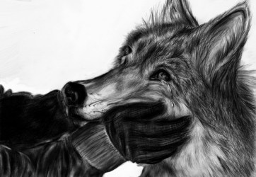 wolf drawings drawing running cool hill wolves blood german hative inspiration deviantart