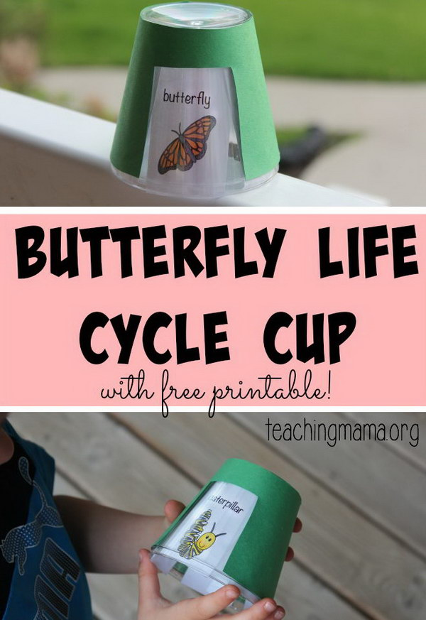 Butterfly Life Cycle Project