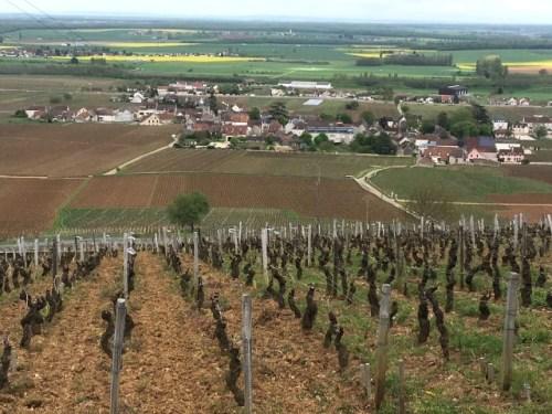 丘の上から見たロマネコンティの畑