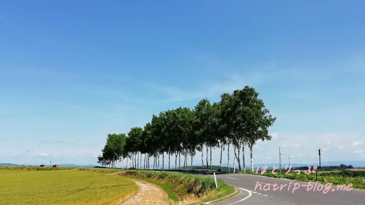 北海道 美瑛の丘めぐり セブンスターの木 白樺並木