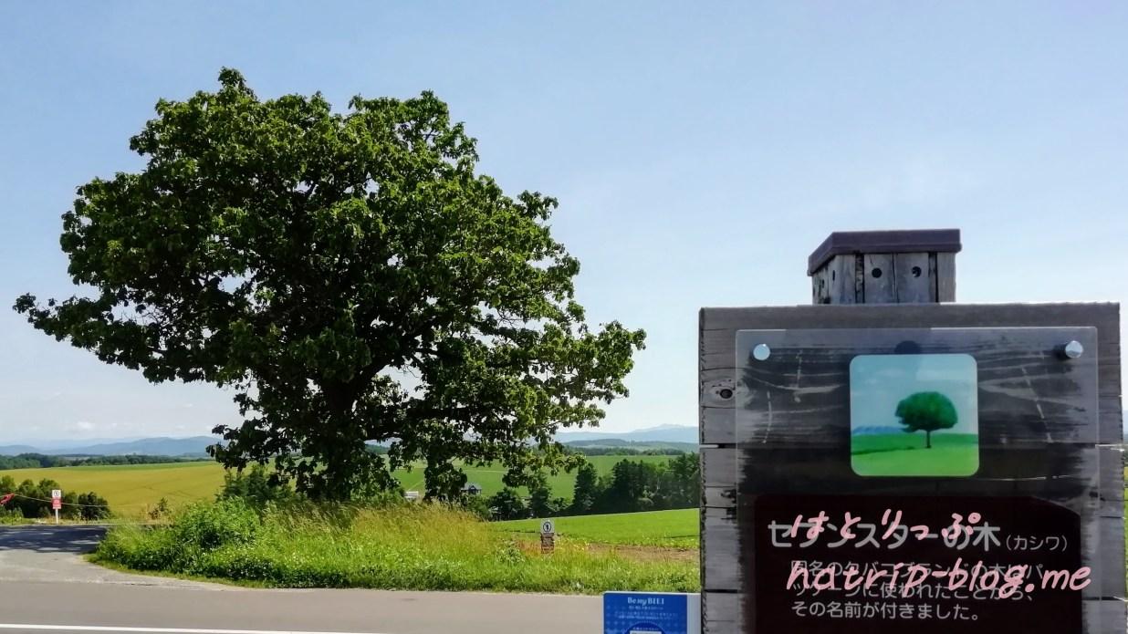北海道 美瑛の丘めぐり セブンスターの木