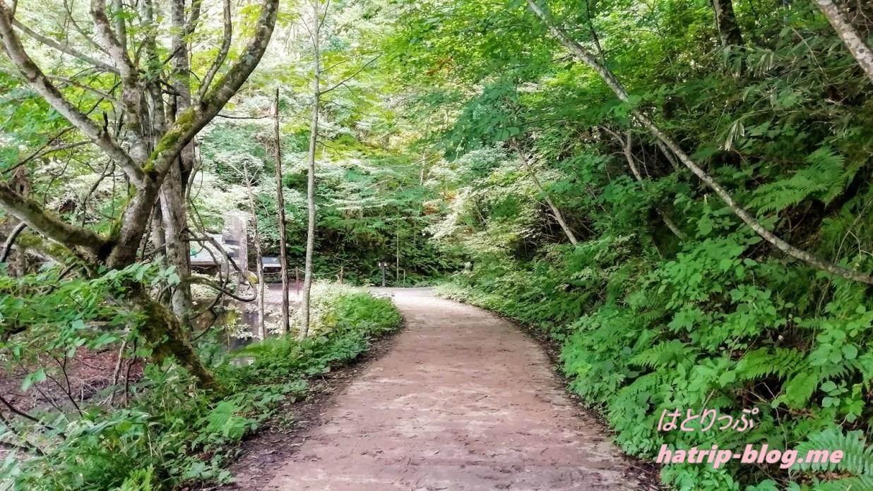 青森県西津軽郡 白神山地 十二湖 青池 散策コース