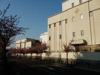 金城学院高校への行き方2-高岳駅編、名古屋の早咲き桜、文化のみち
