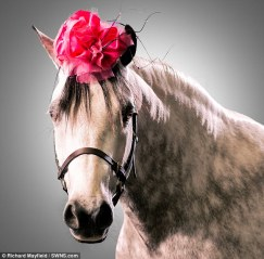 Horses Wearing Hats