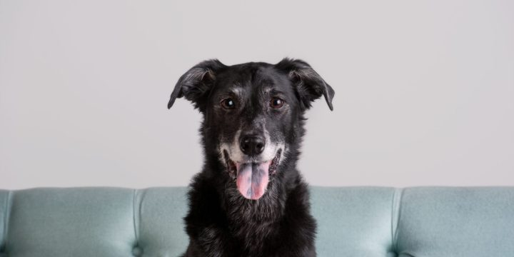 Senior Pets: Answers to Common Questions