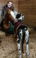 photo of great dane in a horse stall with a young mare and smiling girl