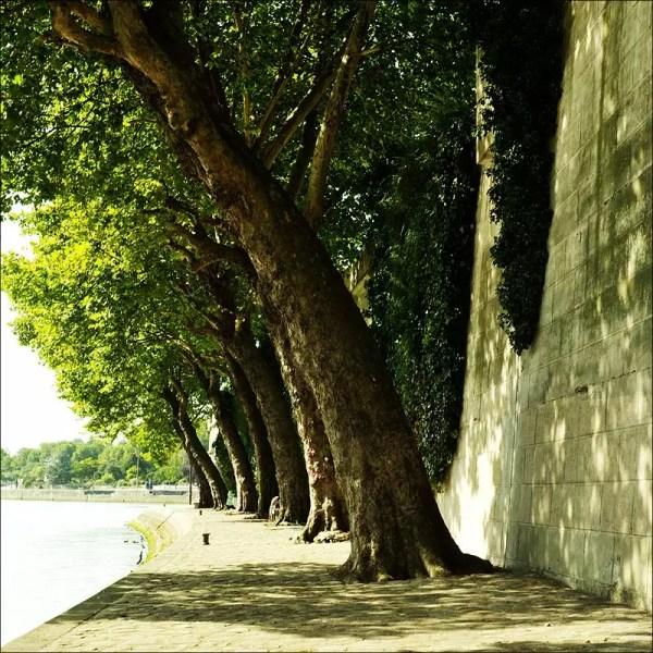 un endroit ombreux aux berges de la Seine. Île St. Louis, Paris 4e