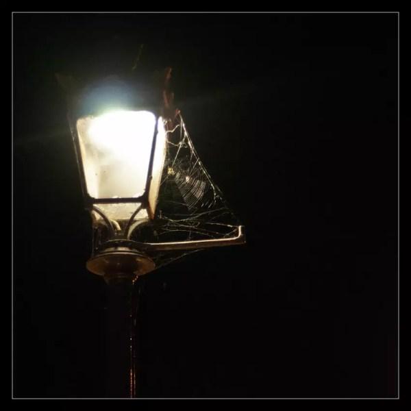araignée. Illuminée.