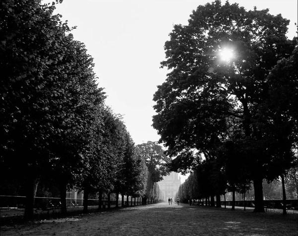 le soleil se cache encore au-derrère des arbres. Tuileries, vue vers le Louvre