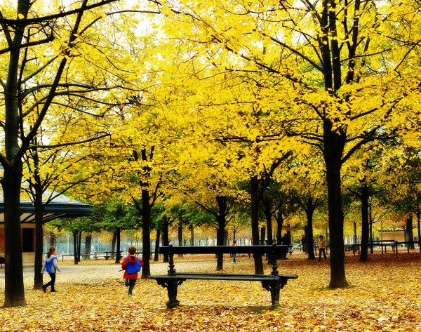 joie de vivre dans les feuilles. Au Luco.