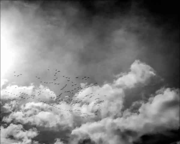 le vol des oiseaux vers le sud