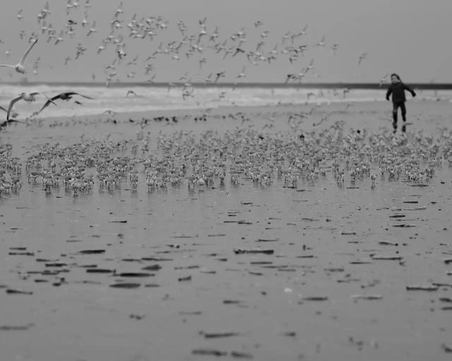 chasser les oiseaux