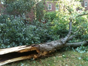 how to deal with downed trees
