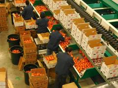 Western  Produce Shipments; Are Produce Rates too High?