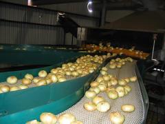 L.G. Herndon Jr. Farms Introduces Superfit Greens