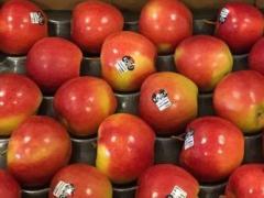 KORU Apples Arriving at U.S. Ports for Distribution