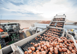 U.S. Onion Shipments Seen as Normal and Steady this Season