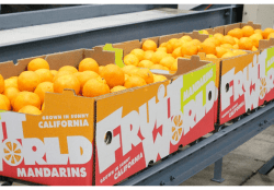 Good California Citrus Volume Seen by Fruit World