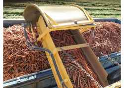 Kern County Vegetable Shipments are Underway
