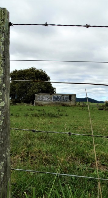 Derelict Milking Shed – Huntly
