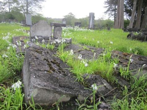 Kioreroa Cemetery 10