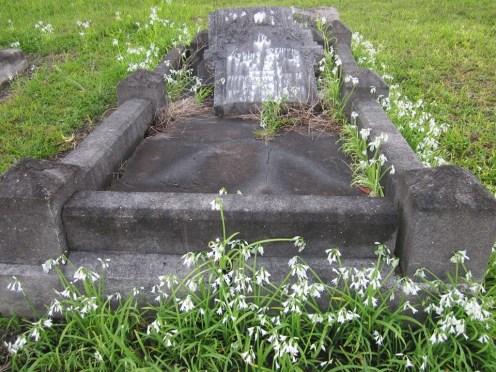 Kioreroa Cemetery 14