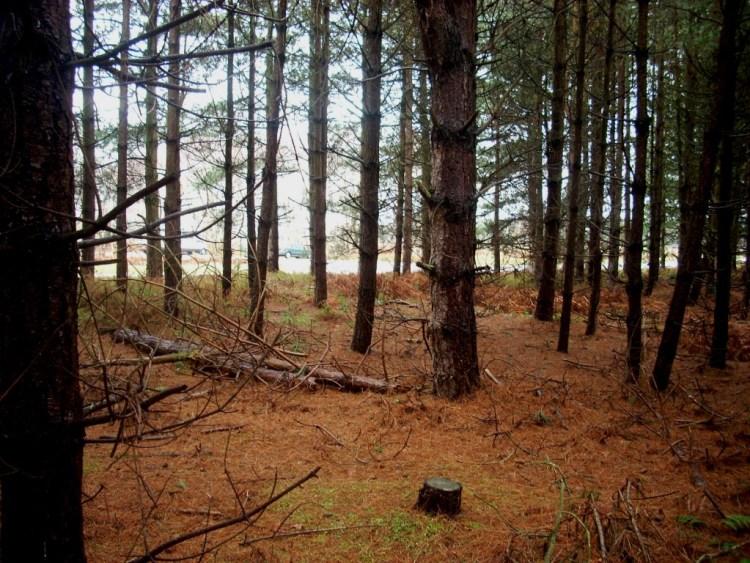 Rendlesham Forest