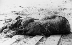 St_augustine_carcass