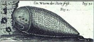 Stone worm, pic 1
