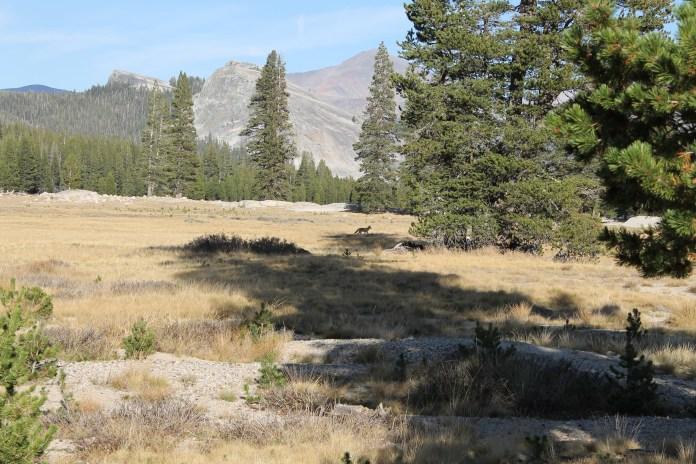 lake-tahoe-2015-268