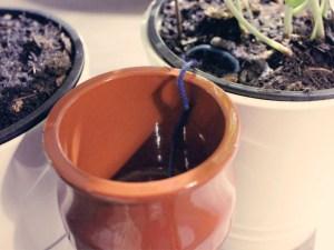 pflanzen-urlaub