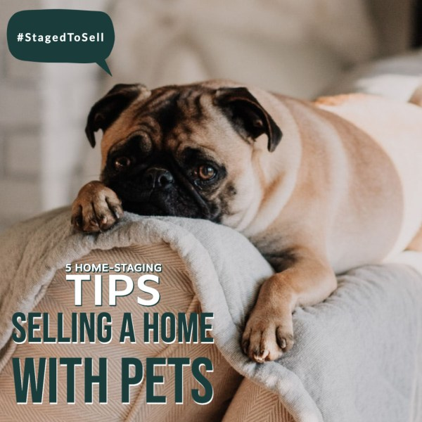5 Home-Staging Tips for Selling a Home with Pets