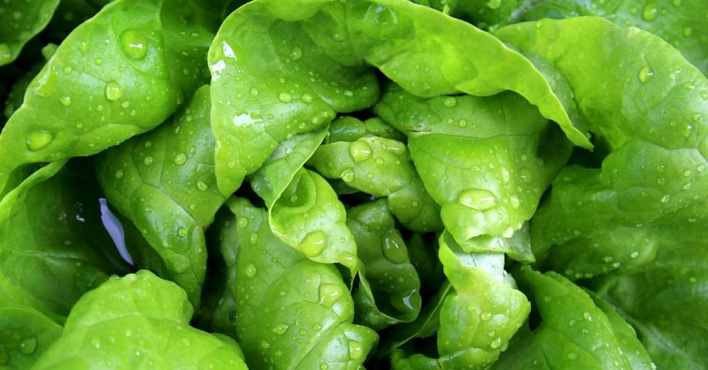 Alan Powelson Sibcy Cline Lebanon How to Keep Veggies Fresh Alan Powelson Sibcy Cline Lebanon