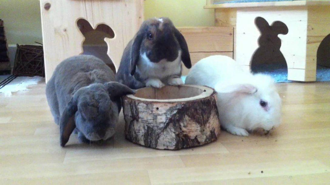 Spielzeug Fr Kaninchen Selber Machen  Haus Design Ideen