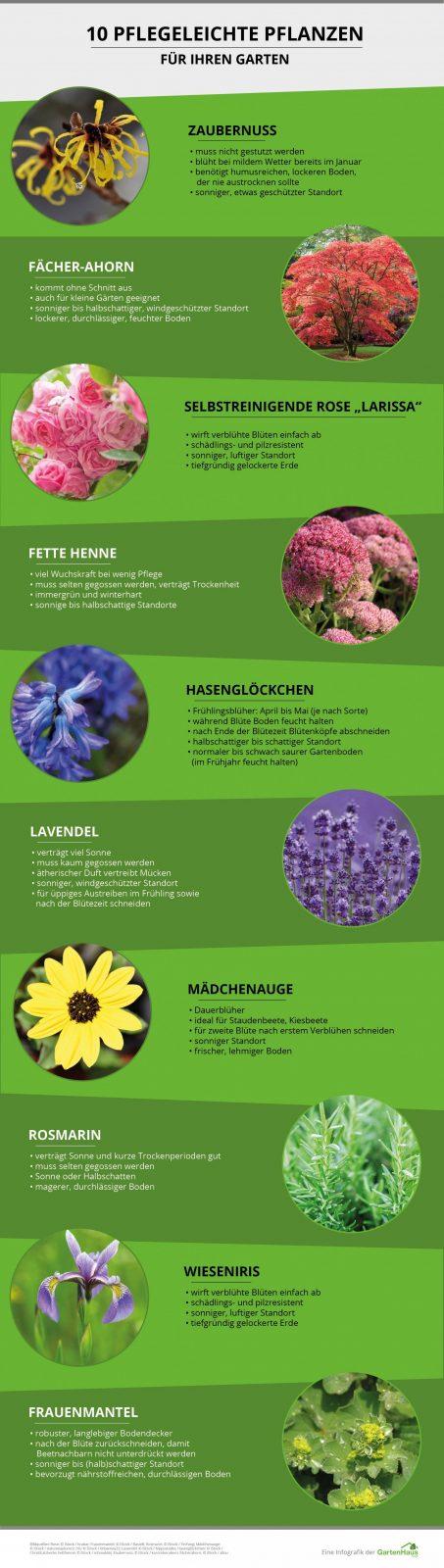 Pflegeleichte Pflanzen Fur Die Kuche Exotenherz