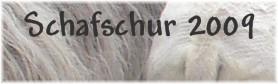 Schafschur2009b