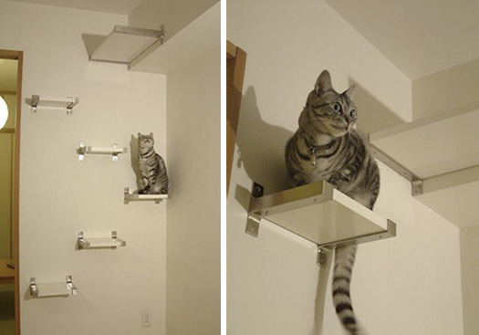 Stairway To Kitty Heaven O Hauspanther